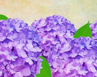 Purple Flowers, Hydrangea Art Print, Hydrangea Flower Petals, Spring Flowers, Flower Art, Mother's Day, Gift for Her, Fine Art Photography