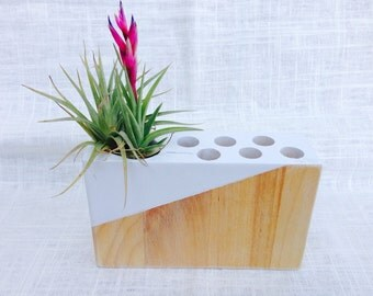 DESK ORGANIZER, MODERN, birch wood, home and office  holds 1 air plant, airplant or succulent.