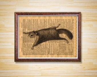 Flying Squirrel Etsy