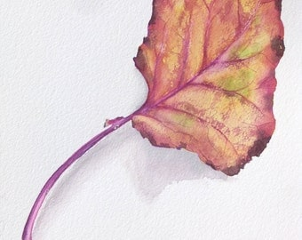 Watercolor Painting-Brussel Sprout Leaf