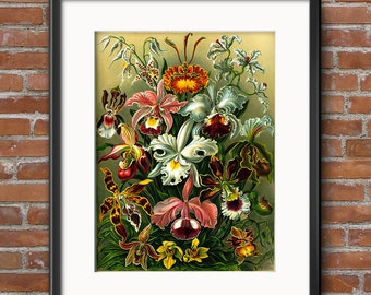 Ernst Haeckel Botanical Art Print, Botanical Poster, Victorian Era Scientific Illustration, Wall Art Floral Art, Orchids, Prints - 0390