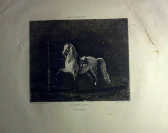 Gustave Marie Greux Original Etching - LE CHEVAL BLANC circa 1910