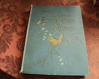 British and European butterflies and moths antique book