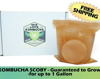 "ORGANIC KOMBUCHA ""Mushroom"" - Artisan Crafted  Starter Culture - Brews up to 1 Gallon - WeLoveKombucha"