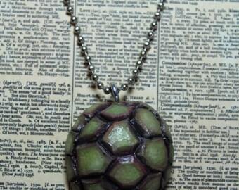 avocado seed turtle