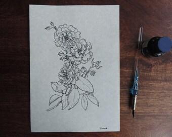 Rose Flowers , Dip pen and Ink original drawing