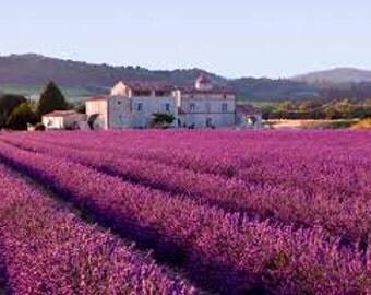 Lavender 40/42 - 100% Pure Essential Oil