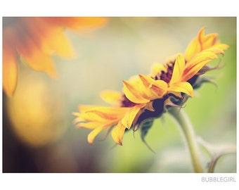 Nature Photography PRINT, Towards the Sun, Wall Art