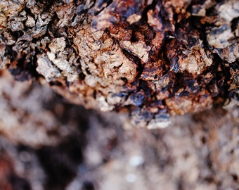 Close up tree bark photo