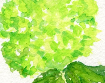 ACEO Green Hydrangea watercolor painting original, green hydrangeas art card, original watercolor lime green hydrangeas, miniature painting