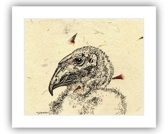 Condor Art Pen and Ink Drawing Original Drawing Black and White California Condor chick artwork on handmade paper