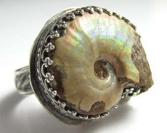 Prehistory Ring - Fossilized Shell Ammonite in Sterling Silver Adjustable