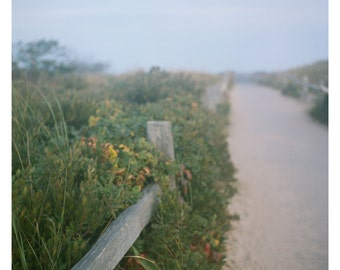 Beach Decor Sand Dune Pathway Landscape Yellow Green Cape Cod Photography Marconi
