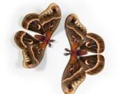 Papercut Earth-tone Moth Decoration