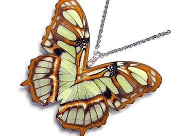 Real Butterfly Wing Necklace / Pendant (WHOLE Siproeta Stellenes Butterfly - Verso - W114)