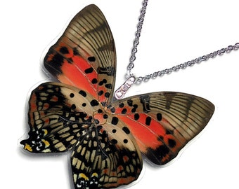 Real Butterfly Wing Necklace / Pendant (WHOLE Charaxes Zingha Butterfly - W093)