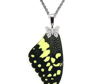 Real Butterfly Wing Pendant / Necklace (Papilio demodocus forewing - N079)
