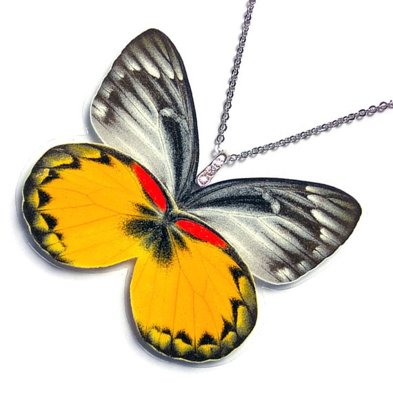 Real Butterfly Wing Necklace / Pendant (WHOLE Delias Oraia Butterfly - W018)