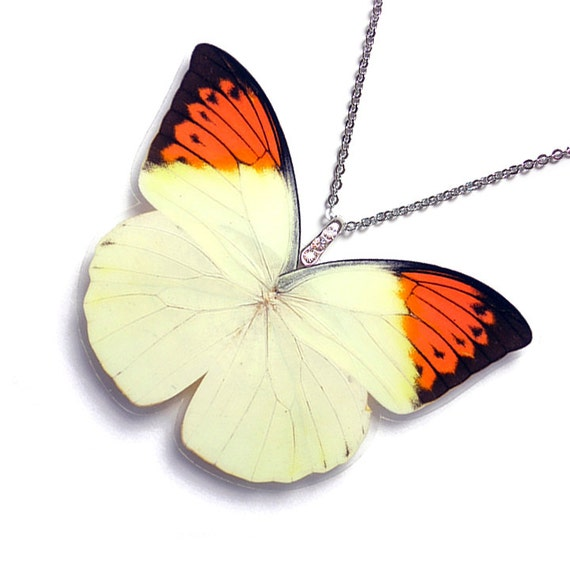 Real Butterfly Wing Pendant / Necklace WHOLE Hebomoia