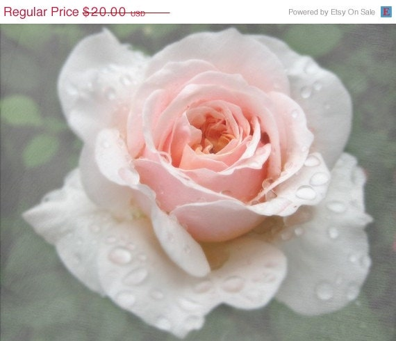 REDUCED A Rose After the Rain Digital Photograph, Rain Drops, Pink Rose