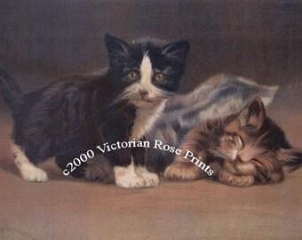 Three Baby Kittens Print Victorian Half Yard Long Cat Kitten Feline