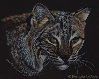 Bobcat Art Note Card