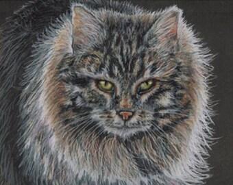 Colored Pencil Long Hair Tabby Cat Drawing