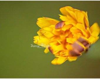 Spring Wild Yellow Flower Fine Art Canvas wrap- Macro