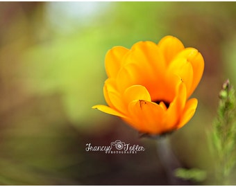 Spring Orange Blossom Flower Fine Art Canvas wrap- macro 4