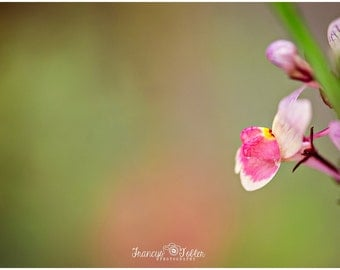 Spring Pink Snapdragon Flower Fine Art Canvas wrap-