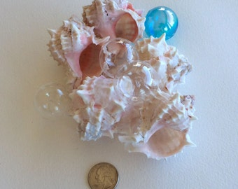 BEACH DECOR SEASHELLS, pink murex, 5 pieces, wedding decor, pink and white, coastal decor, nautical decor, supplies for crafting