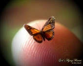 "Miniature Butterfly, Monarch, Danaus Plexippus, Dollhouse Scale, 1:12, 1/4"" Wingspan, 6 mm, Micro, GFF"
