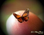 """Sale- Monarch, Miniature Butterfly, Danaus Plexippus, Dollhouse Scale, 1:12, 1/4"""" Wingspan, 6 mm, Micro, GFF"""