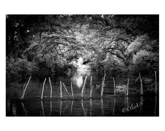 Water Fairy Fence Fine Art Photography Black and White dramatic river dreamy mystical haunting dark water ancient oak trees lhome decor art