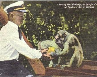 Vintage Florida Postcard - Feeding Monkeys on the Jungle Cruise, Silver Springs (Unused)