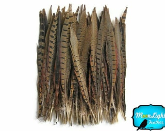 "Tail Feathers, 50 Pieces - 12-14"" NATURAL Ringneck Pheasant Tail Wholesale Feathers (bulk) : 3878"