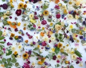 Flower Confetti, Flowers, Dried Petals, Natural,  Wedding Confetti, Dried Flowers, Tossing Mix, Decoration, Wedding, Confetti, 5 US cups