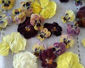 Pansy, Dried Pansies, Hawaiian, Real, Pansies, Dry Flowers, Wedding Decor, Decoration, Centerpiece, Pot Pourri, Craft Supplies, Edible