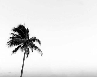 Tropical Black and White Palm Tree Art Print Beach Decor Minimalist Palm Tree Print California Print