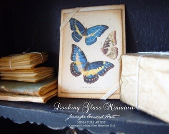 Miniature Vintage Botanical Blue Butterflys Print Mounted for Dollhouse 1/12 Scale