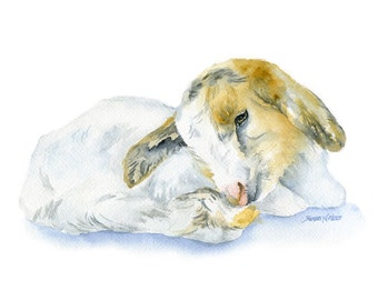 Goat Lying Down Watercolor Painting - 5 x 7 - Giclee Print - Farm Animal