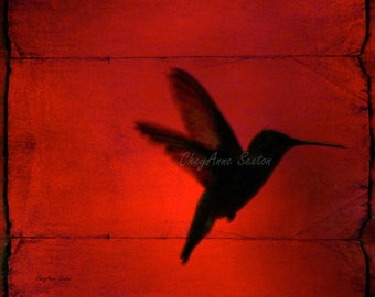 really Red Hmmingbird Behind the Blinds on giclee 8x8 fine art print