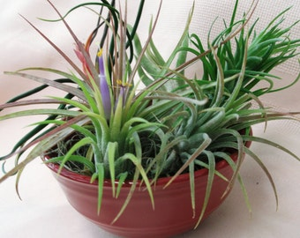 Buddha bowl air plant arrangement just perfect for your desk at the office