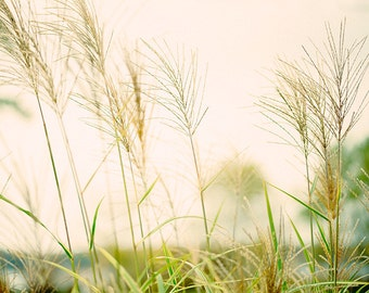 Summer Field, Art, Photography, Fine Art Print, Summer Light, Wheat, Cream, Pale Green, Sunshine