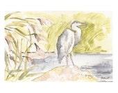 """Blue Heron Sketch II, Print of Watercolor, 4"""" x 6"""""""