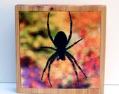 REDUCED Scary Spider Block, Orb Weaver Spider, Fall Colors