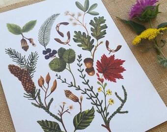"North American Trees. 8.5"" x 11"" Art Print"