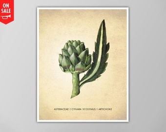 SALE - Artichoke Art Print, Artichoke Art Print, Kitchen Art Print, Natural History Kitchen Print, Artichoke Plant Kitchen Decor, Art Print