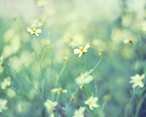 items similar to aqua wall art flower photography mint green teal white yellow flower wall art pretty wildflowers picture of flowers moonbeam coreopsis
