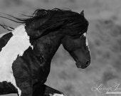 Washakie Runs by - Fine Art Wild Horse Photograph - Wild Horse - Black and White - Washakie